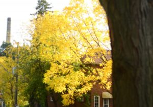The Charming Layers Of Autumn